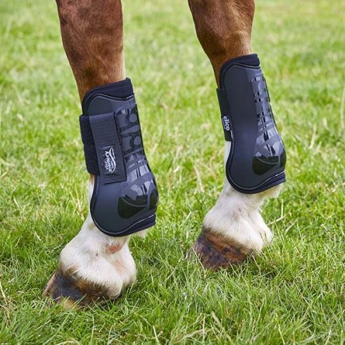 Tendon & Fetlock