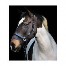 Equilibrium Stellar Head Collar