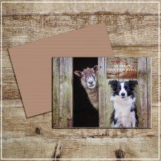 Kitchy & Co Greetings Card Look out ! She's behind Ewe