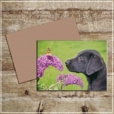 Kitchy & Co Greetings Card Always take time to smell the flowers