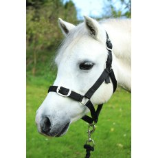 Gallop Headcollar and Lead Rope Set