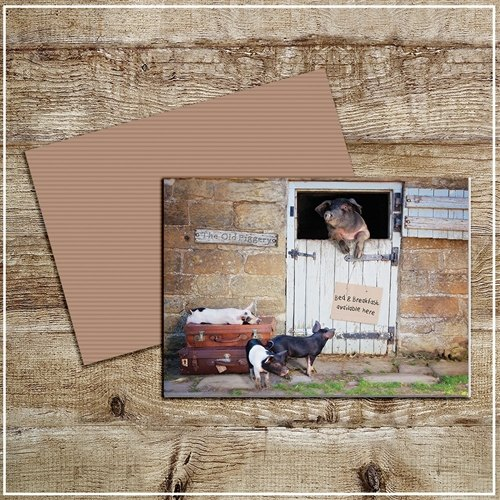 Kitchy & Co  Kitchy & Co Greetings Card B&B pigs