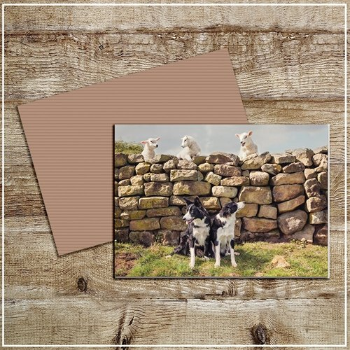 Kitchy & Co  Kitchy & Co Greetings  Card Cheeky Petlambs