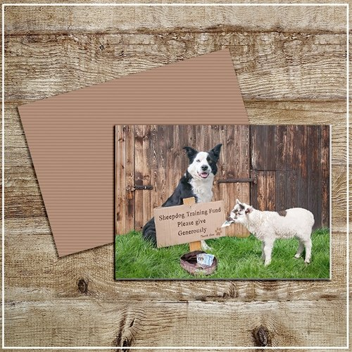 Kitchy & Co  Kitchy & Co Greetings Card Sheepdog training