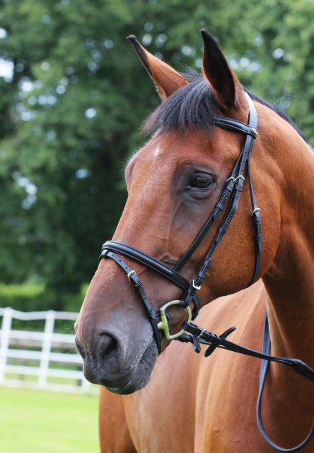 Gallop Gallop Economy  Bridle with Flash